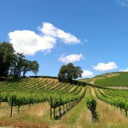 Top 11 Sonoma Wine Tasting Finds