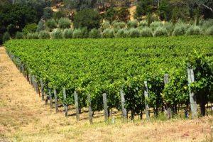 dutch henry vineyard
