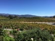 francis ford coppola winery 1