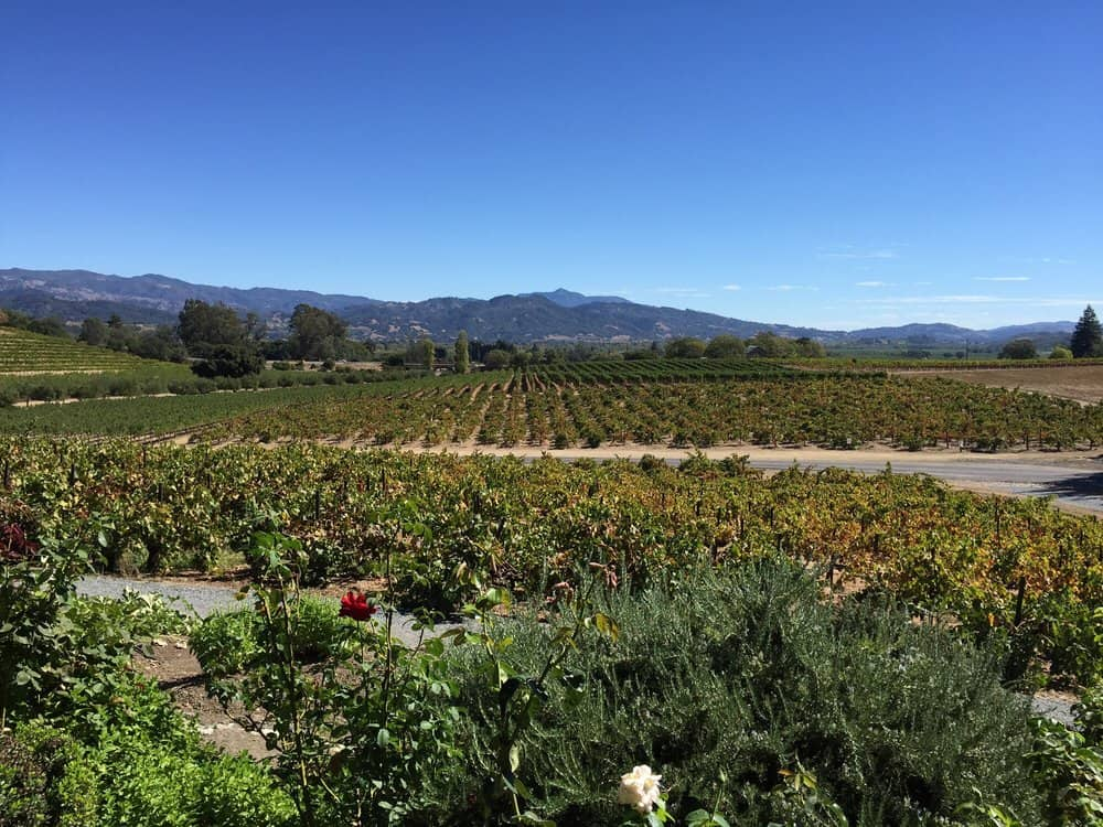 coppola winery vineyard
