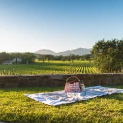 Discount Wine Tasting Itinerary | NAPA VALLEY