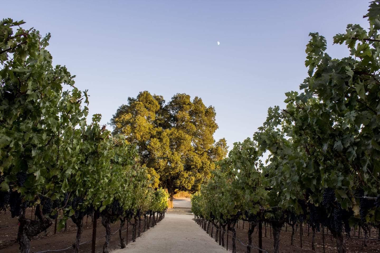 david arthur winery napa