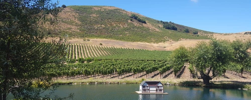 schug winery vineyard carneros