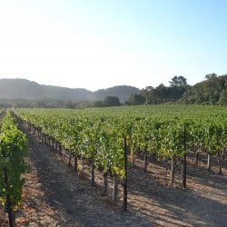 Napa's Mountain Vineyards | The secret to great wine