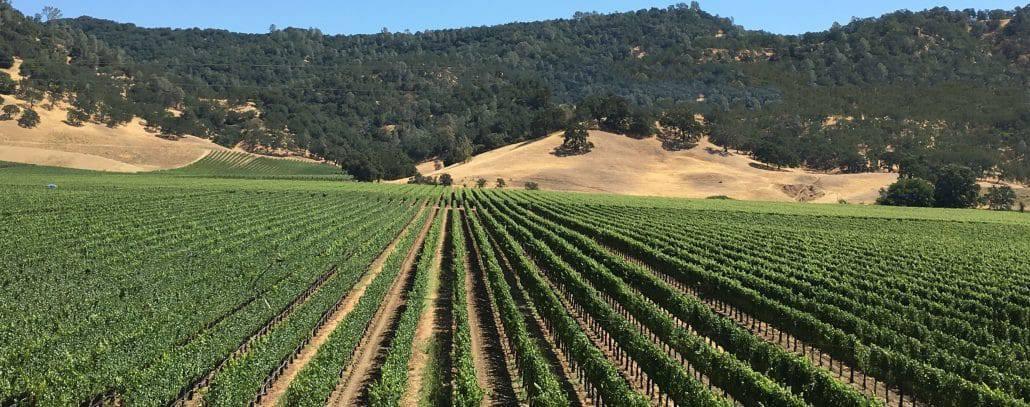 white oak winery discount