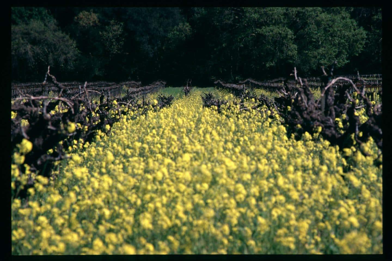 best healdsburg wineries