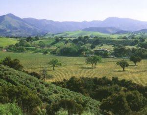 koehler winery santa barbara