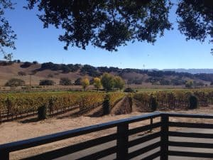 santa ynez winery rusack