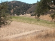 shale canyon wines vineyard
