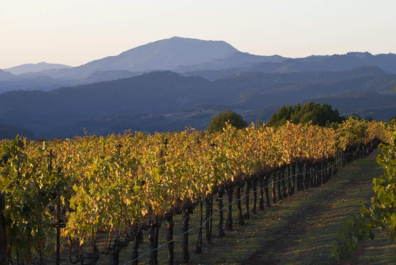 premium wine tasting in napa valley california