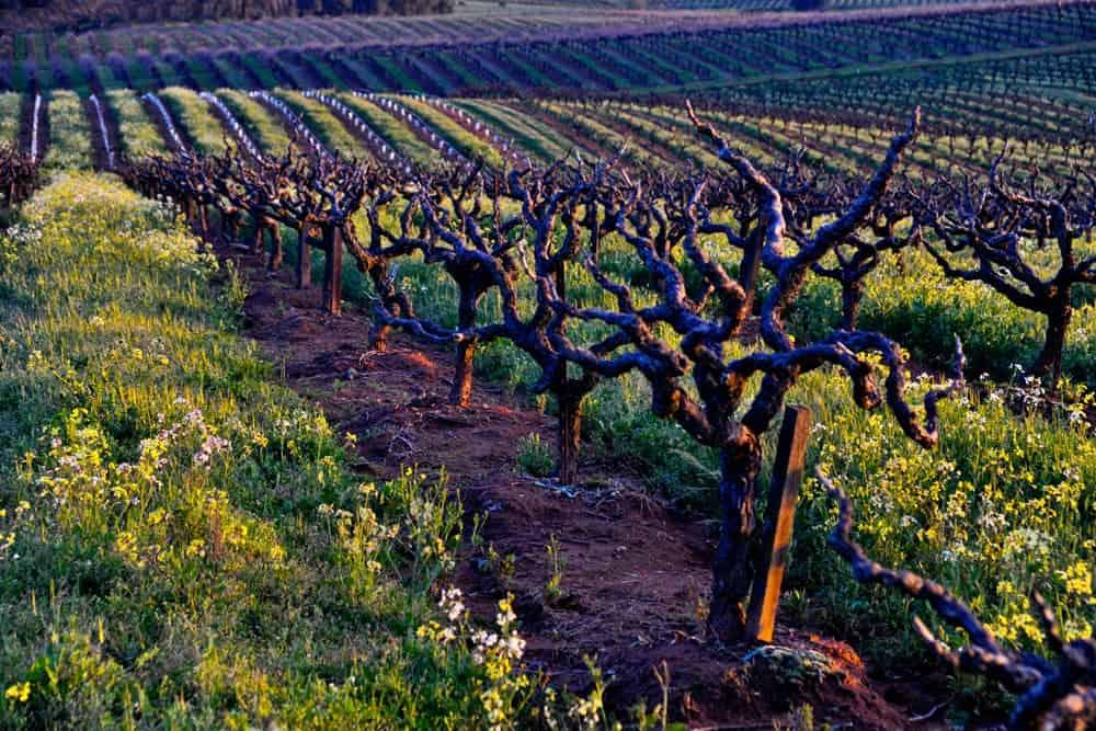 amador county best wineries