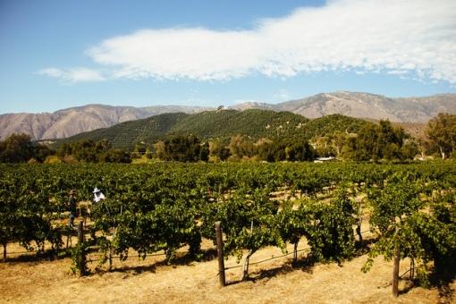 vesper vineyards