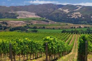 longoria wine santa barbara
