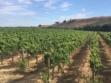 kieu hoang winery vineyard