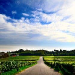 franciacorta wines
