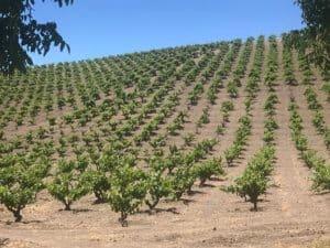 field blend wines