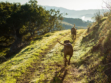 pence vineyard dogs