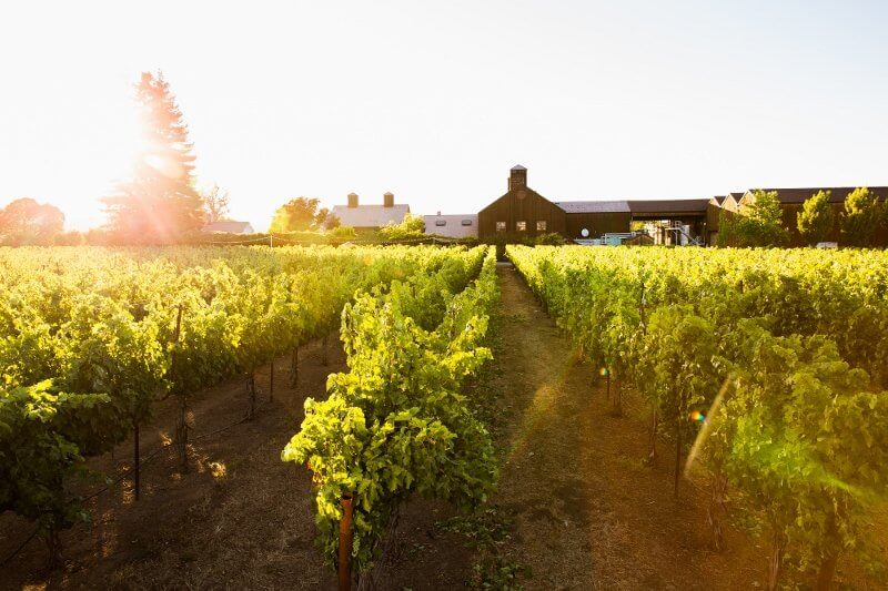 top napa wineries