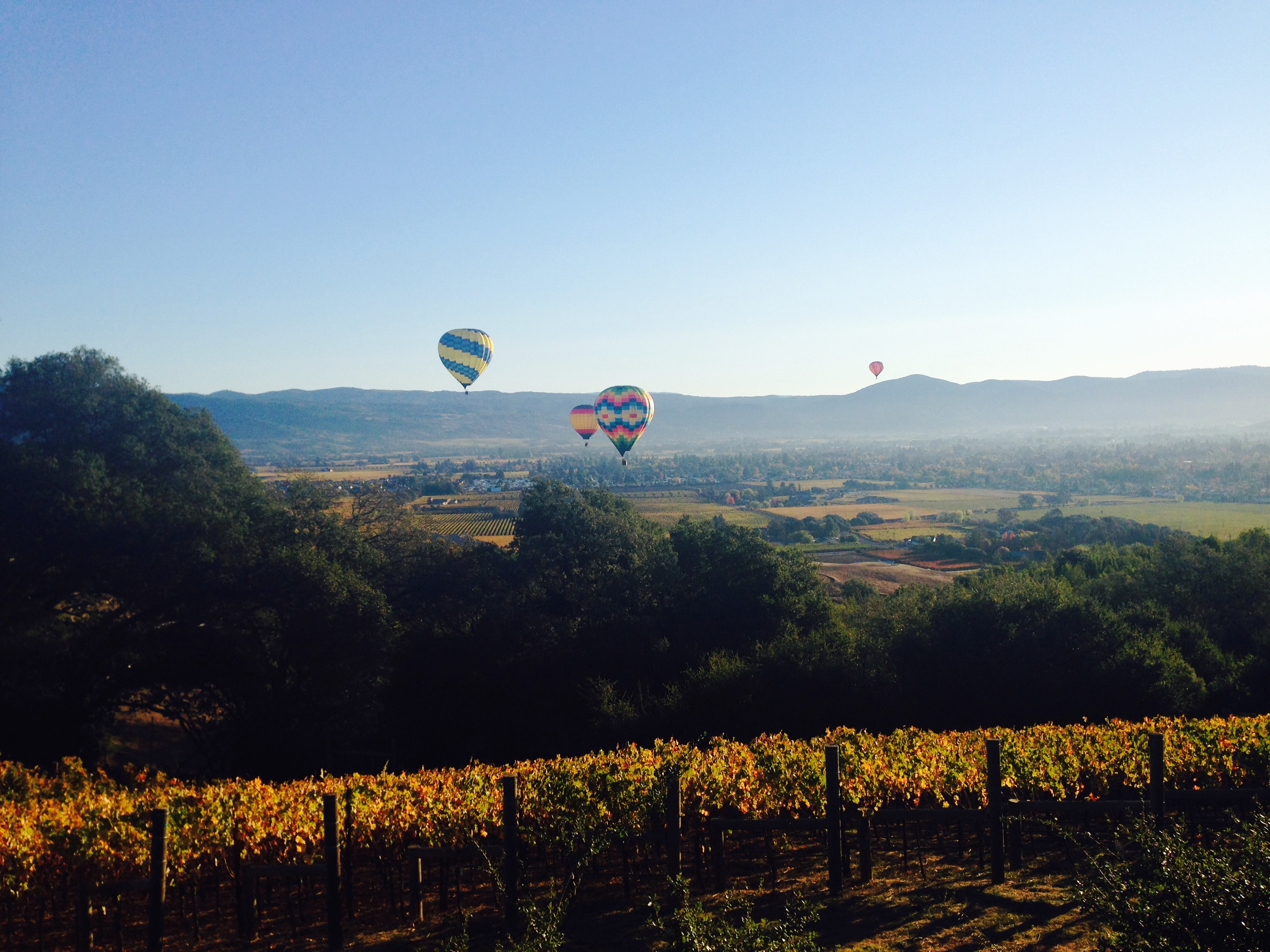 Hot-air-balloons-over-vineyard