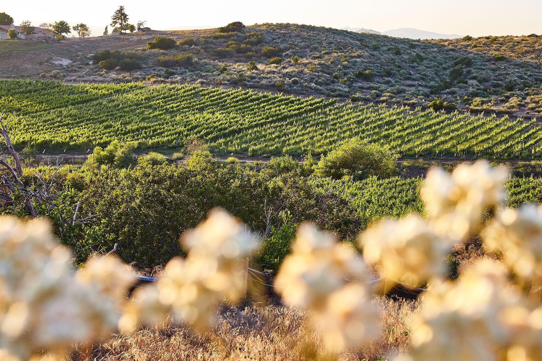 CA-Wine-Advisor_May2016