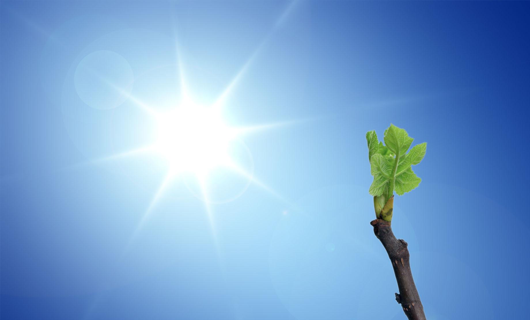 blue-sky-sun-vine